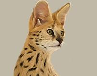 Animal Illustrated