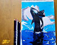 Killer Whale Color Drawing | Powered by Syed Art