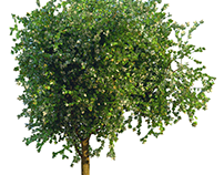 An ashtree model