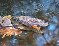 Water Plant, Central Park 11/9/2014