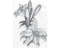 Lilies with underlying shapes