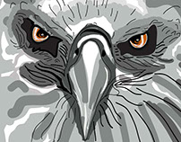 See things By  a Hawk Eyes