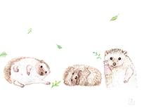 Hedgehog illustrators 刺蝟插畫