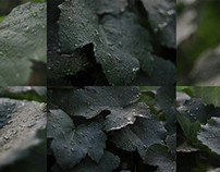 Leaves Part 1