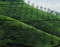 landscape portfolio