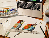 Bee-eaters Illustration