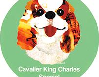 017 | Cavalier King Charles Spaniel
