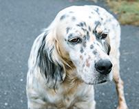 Animal Portraits -dogs-