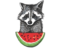 Racoon and watermelon