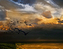 An Unkindness or a Conspiracy of Ravens