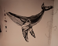 Traveller whale
