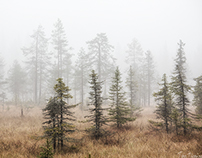 Sumu | Misty autumn forest