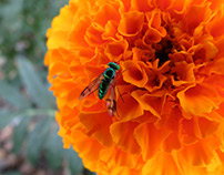 Marigold and Green