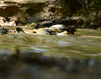 A Dip in the Creek