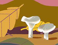 Mushrooms season