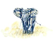 No. 8 African Elephant