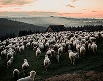 PODHALE | TATRY | POLAND