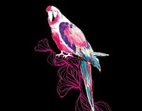 Illustrations   Birds