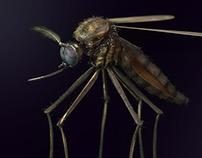 3D Gnat