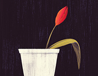 Tulip in a Cup