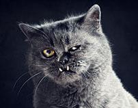 Jackson: Portraits of a Grumpy Cat