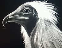 Sketch of an Egyptian vulture