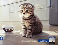 MIRA gatos
