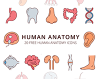 Human Anatomy Vector Free Icon Set