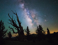 The Ancient Bristlecone Pine Forest