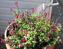 Spring Choice Photo Essay 2nd Sem.- Planting