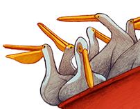 Scoop of Pelicans