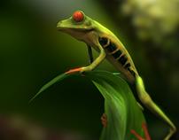 Agalychnis callidryas- red-eyed tree frog