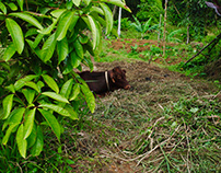 Grenada [Nikon D3000]