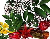 Herbs/2