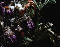 Botanic Study - Flottant | Photography