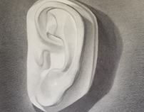 Plaster cast of ear: drawn from life