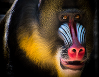 Primates & Great Apes