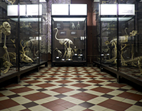 Zoological museum, Moscow