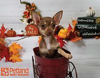 Petland Photography