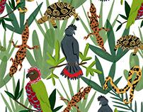 Pattern Illustrations - CARE Center for Avian, Reptiles
