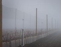 Fog and bluberries