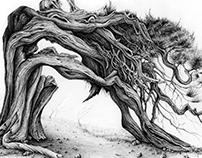 Juniper - Tree 3