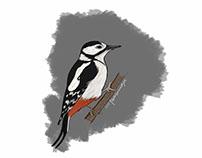 bird illustration - experimentation