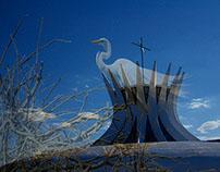 Brasília nature