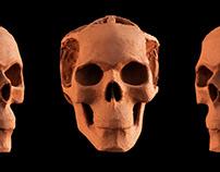 Figure Modeling Skull Sketch