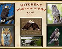 My Wildlife Photography Images