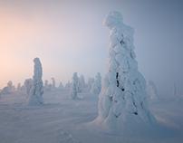 Winter Awakening : Talvi Herääminen