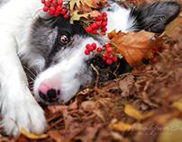 AutumnPrincess