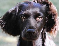 Reesie Pup — Boykin