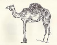 BALLPEN CAMELS